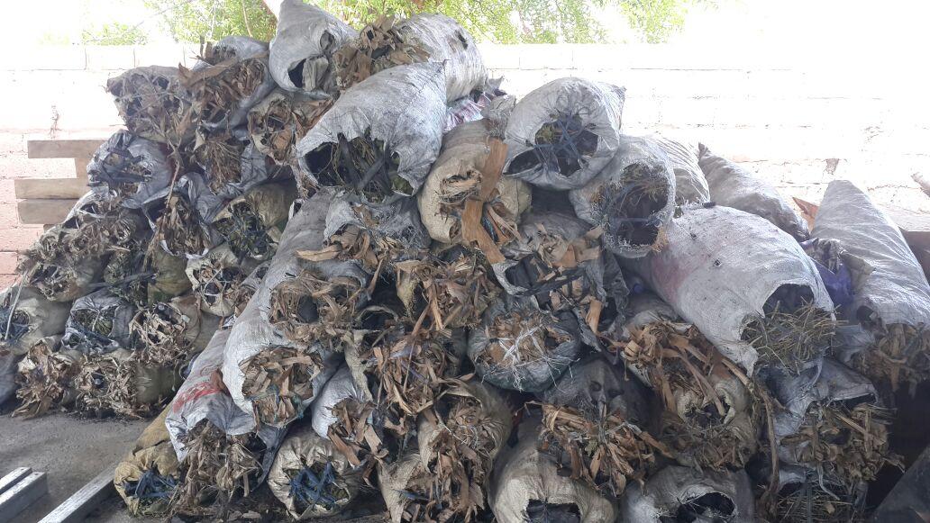 Medio Ambiente allana vivienda en el municipio de Vicente Noble e incautan 79 Sacos de Carbón Vegetal