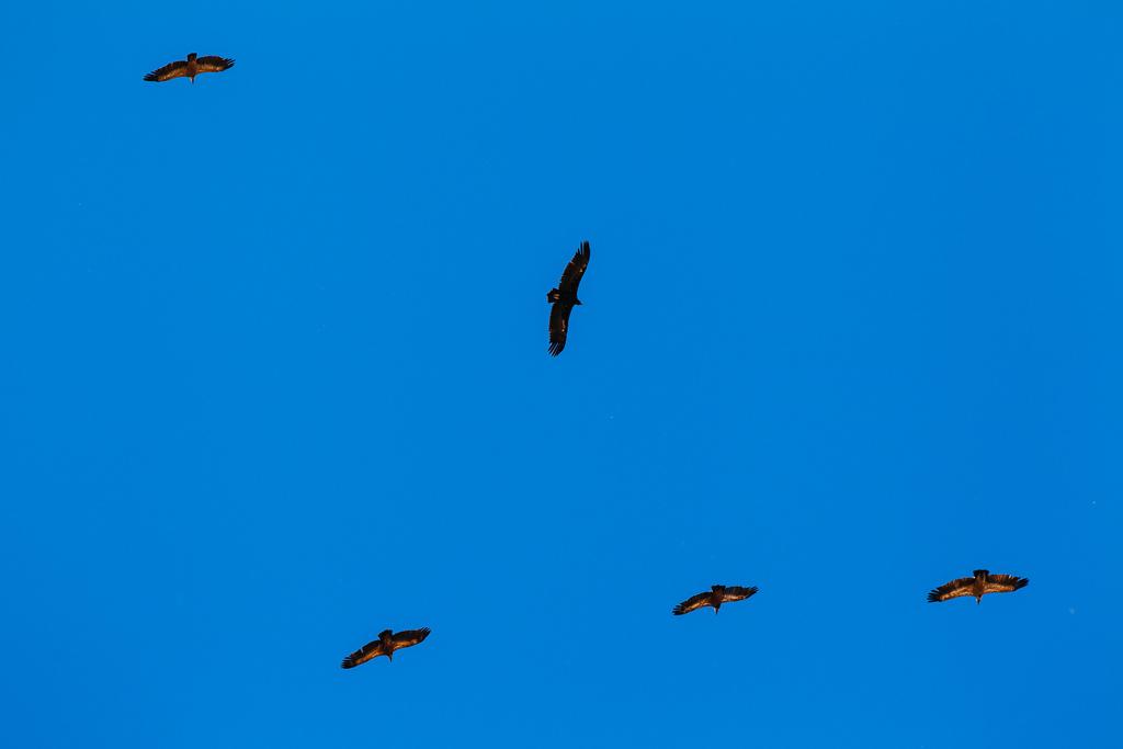 Aves de La Siberia, Extremadura