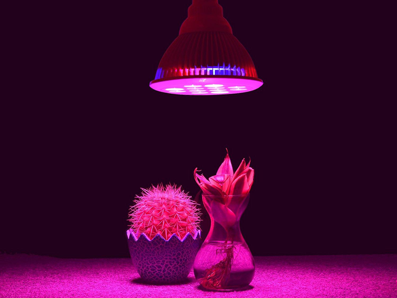 Best Led Grow Lights 2017  Best Led Grow Lights 2017. Dorm Room Essentials Checklist. Simple Dining Room Designs. Transitional Dining Room Furniture. Room Designs For Bedrooms. Room Escape Puzzle Games. Dark Sofa Living Room Designs. Living And Dining Room Designs. Bohemian Room Design