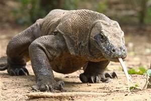 870 Fauna Indonesia Bagian Tengah Beserta Gambarnya Gratis Terbaru