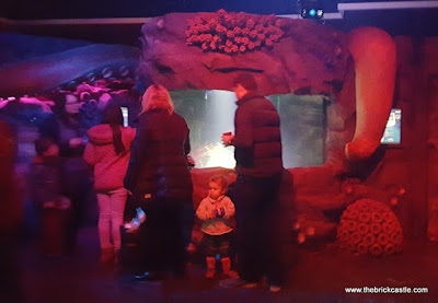 The Octopus Hideout sealife manchester