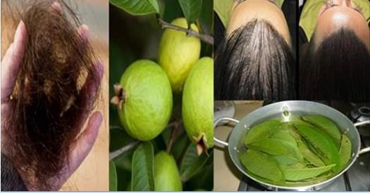 Si a los cabellos poner el aceite de bardana