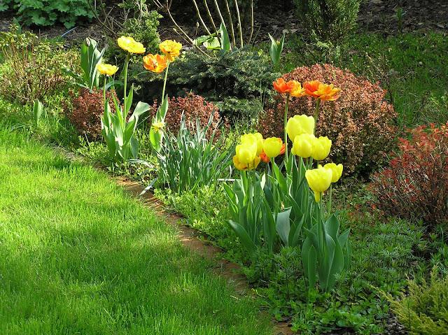 rabata wiosną