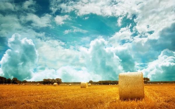 Đặc điểm và vai trò của ruộng đất trong sản xuất nông nghiệp