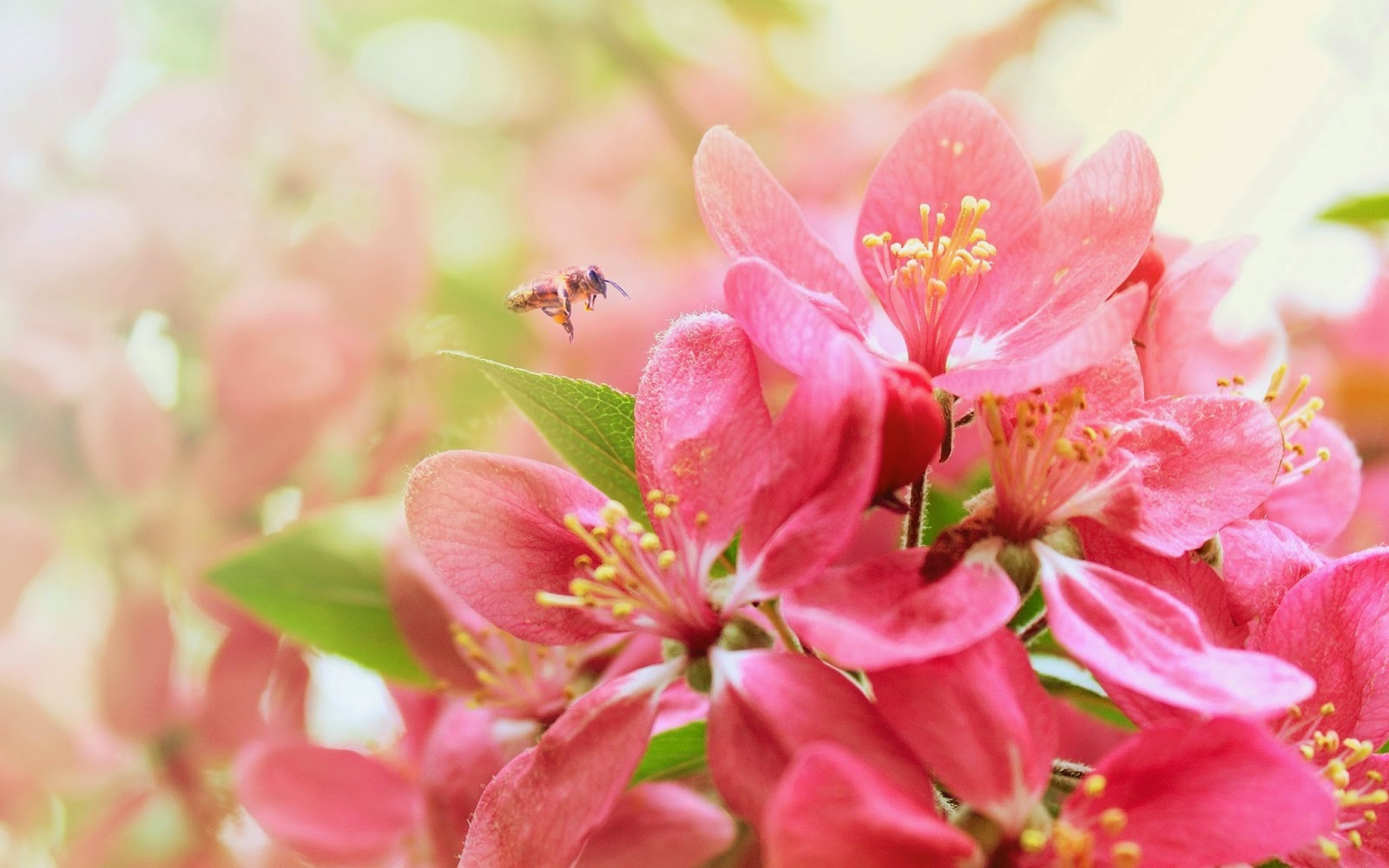 Most Beautiful Flower Wallpapers World|http://refreshrose ...