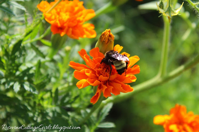 #Garden #GrowYourOwnFood #Chickens #RaisedBeds #OrganicGardening #marigolds #Veggies #Overalls #Farmlifestyle #Farm