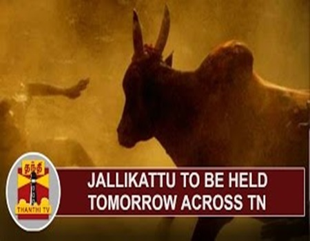 EXCLUSIVE | Jallikattu to be held Tomorrow across Tamil Nadu | Thanthi Tv