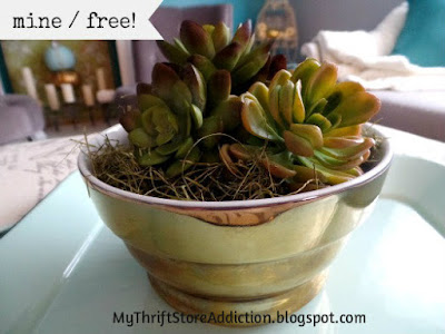 Get the Look for Less: Pier One Knock Off mythriftstoreaddiction.blogspot.com  Pier One Succulent Pot Knock Off