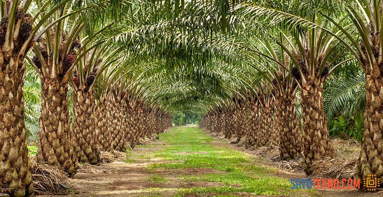 More Oil Palm Plantation Threatens Biodiversity