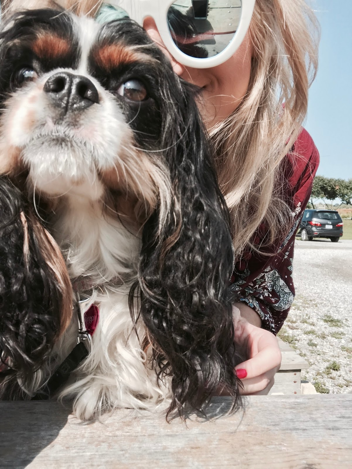 Bijuleni | Glamping With Your Pet at Long Point Eco Adventures Norfolk County - Cavalier King Charles Spaniel
