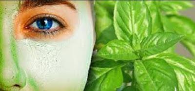 cara membuat masker kemangi, daun sirih obat jerawat, daun kemangi untuk menghilangkan flek hitam, cara membuat toner kemangi, manfaat daun kemangi untuk rambut, daun kemangi untuk flek hitam, manfaat toner kemangi, manfaat makan daun kemangi mentah