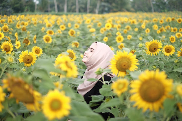 Dengan Kamera DSLR bisa fokus Micro di kebun bunga matahari kediri