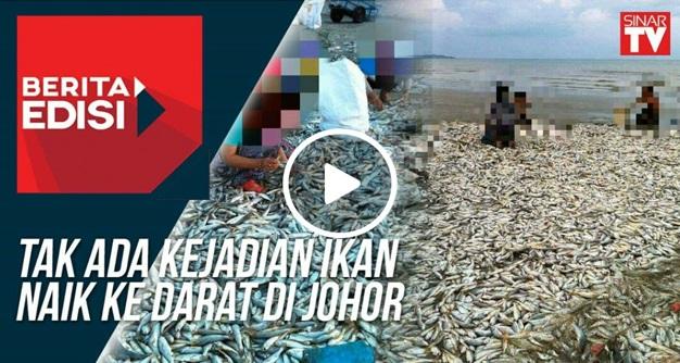 Fenomena ikan naik ke pantai..Adakah bencana bakal berlaku?