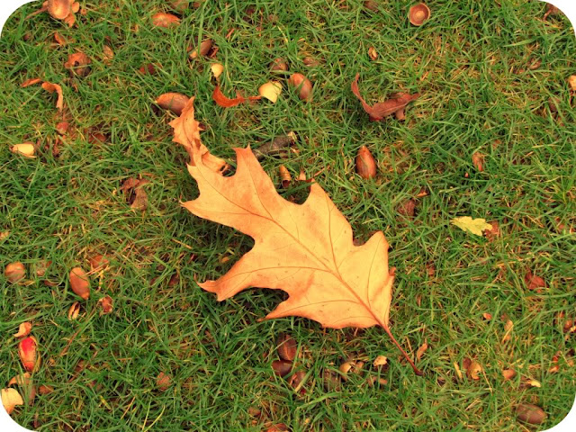 Fallen autumn leaf