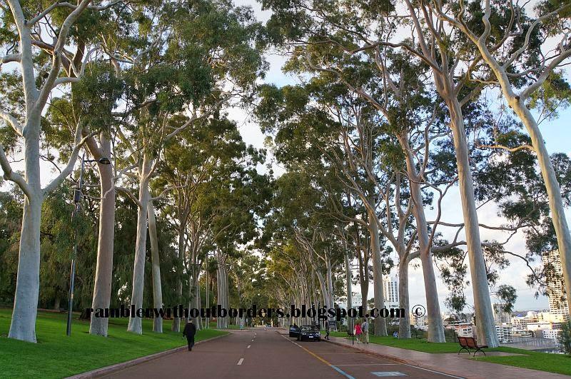 Fraser Avenue, Kings Park, Perth, WA, Australia