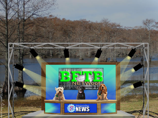 News set on the bayou with three dog news anchors