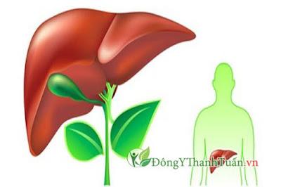 xạ đen giúp giải độc mát gan để có một lá gan khỏe mạnh