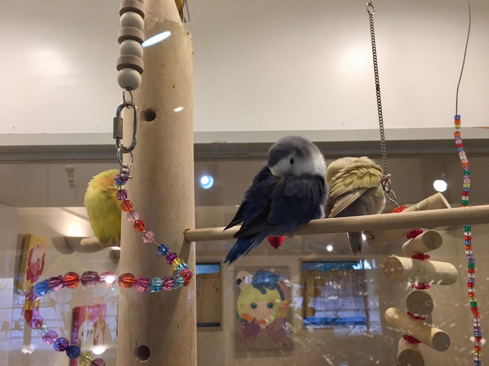 Bird Cafe Aoyama