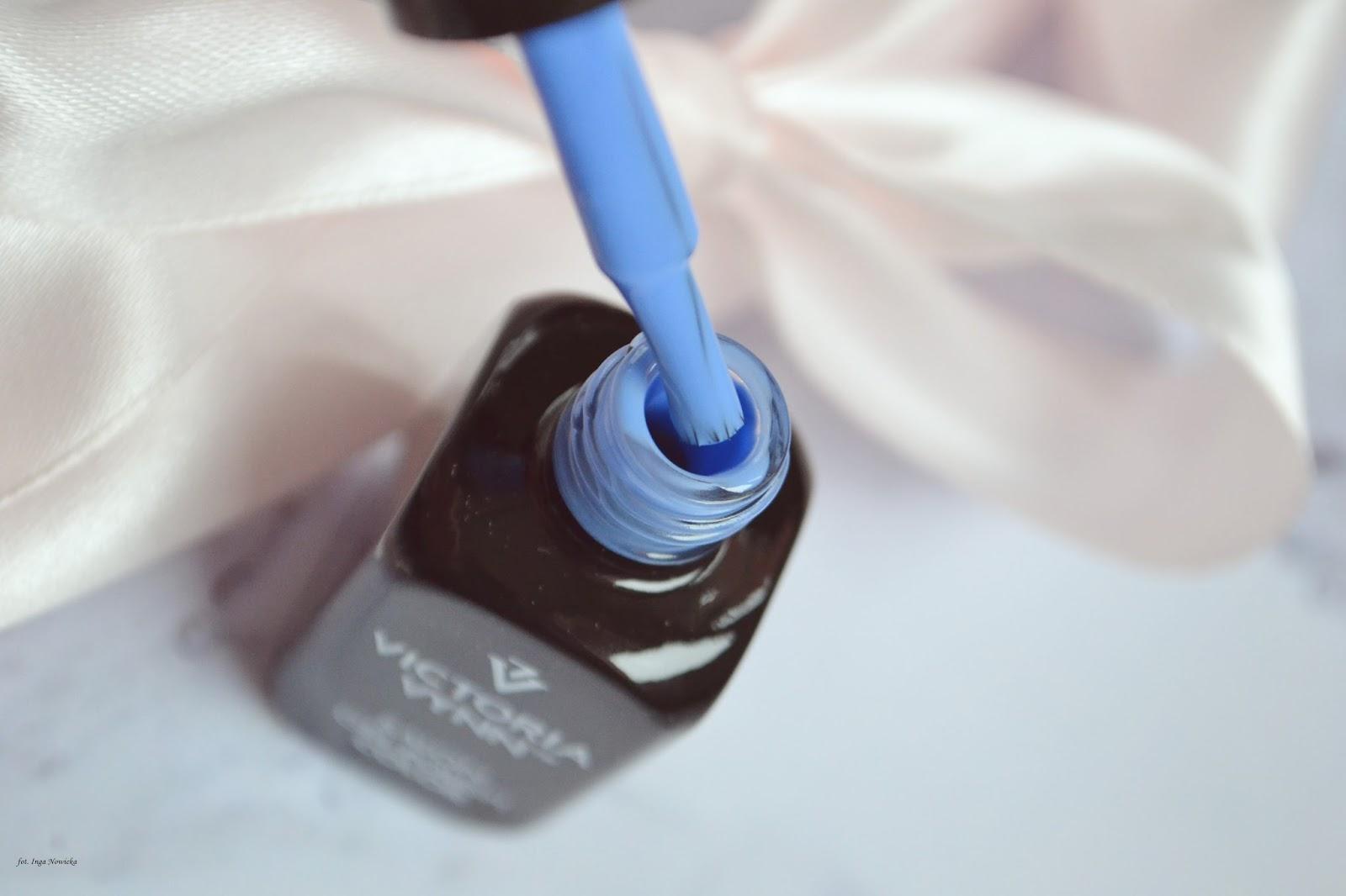 pastelowy niebieski hybryda