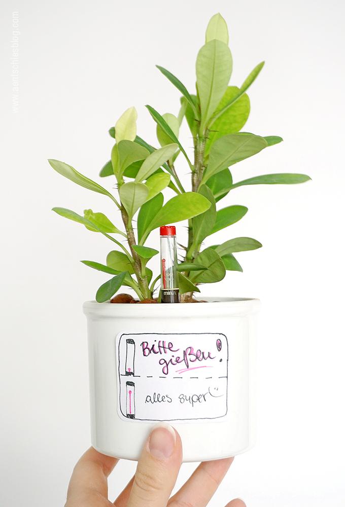 Aentschies Blog Die Hydrokultur Pflanzenpflege Leicht Gemacht