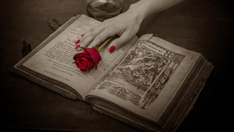 Antique Book Red Rose HD