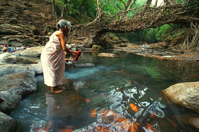 Indian Tribe Masters The Art of Weaving Living Root Bridges