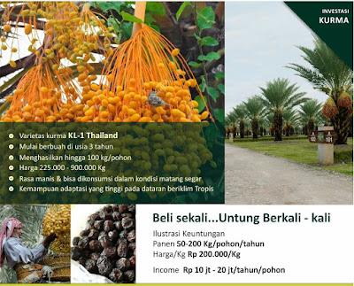 Wisata Kebun Qurban Makassar