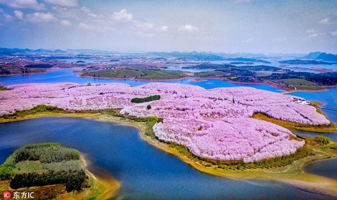 Hòn đảo hoa anh đào 'đẹp rụng rời' ở Trung Quốc - Ảnh 1
