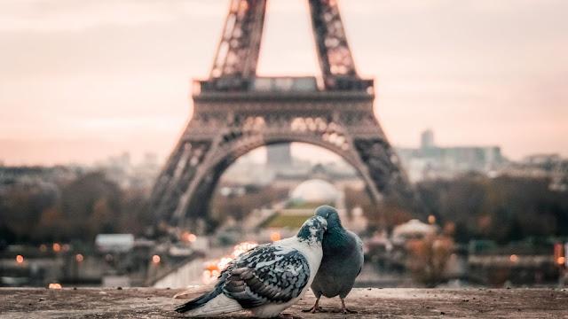 piccioni, colombe, Parigi,