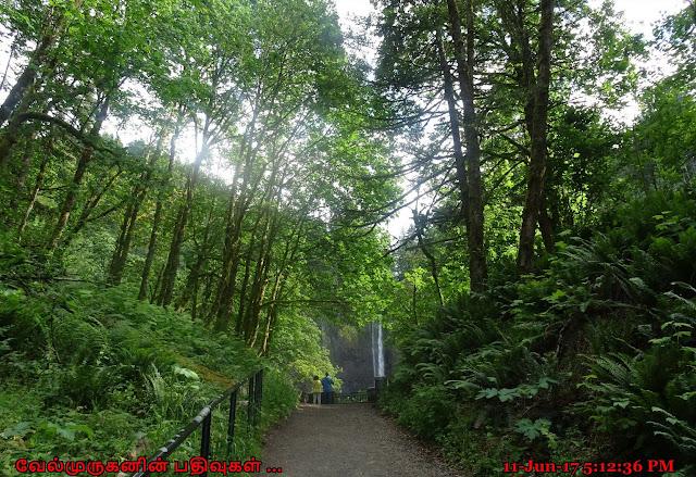 Lower Latourell falls Hike