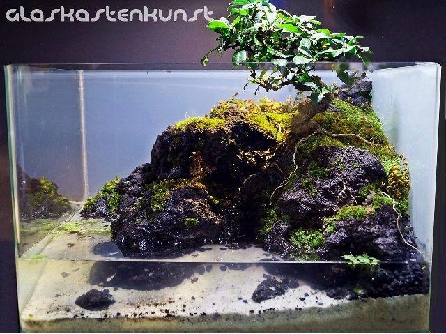 Jenis Bonsai Untuk Paludarium Dan Akuarium Beserta Contoh Gambarnya