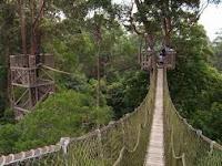 Berwisata ke Bukit Bangkirai yang Mendebarkan