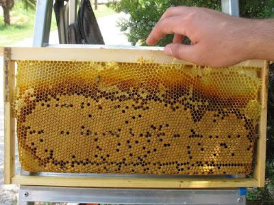 Οικονομική στήριξη της νομαδικής μελισσοκομίας