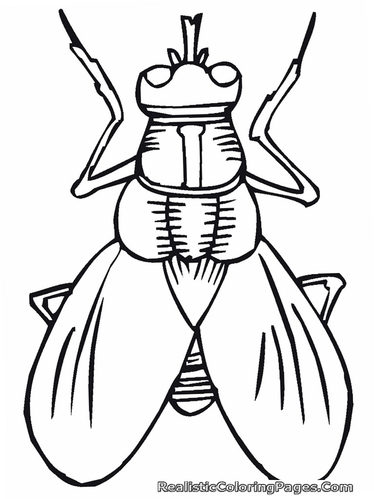 insect coloring pages please - photo#36