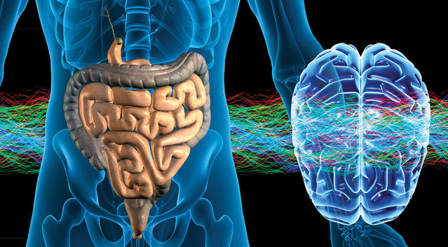 The Gut -Stomach- Is Our Second Brain And The Bacteria Influence Our Brain And Our Mood