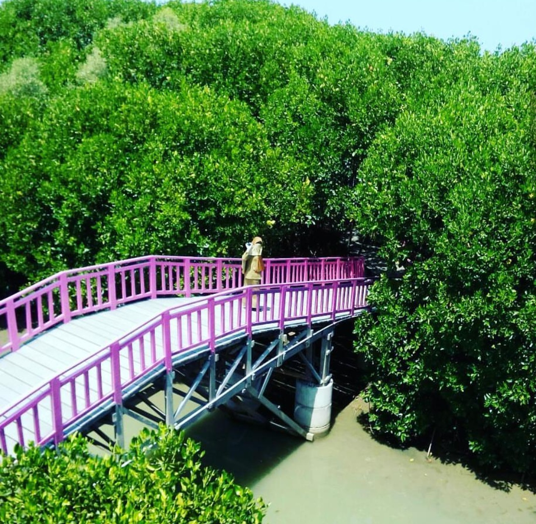 Harga Tiket Dan Rute Hutan Mangrove Pandansari Brebes Terbaru 2018