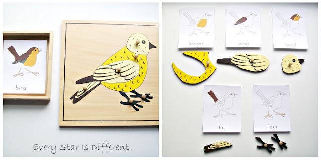 Parts of a Bird Activity with Printable