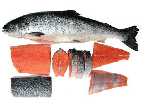 Peshku salmon