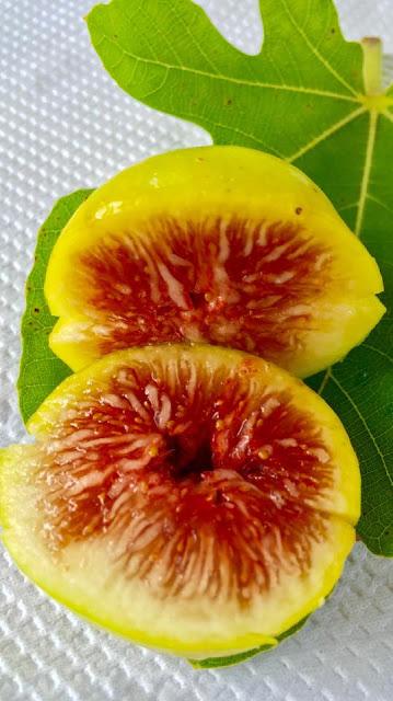 POMONA / MORESCHI Figs