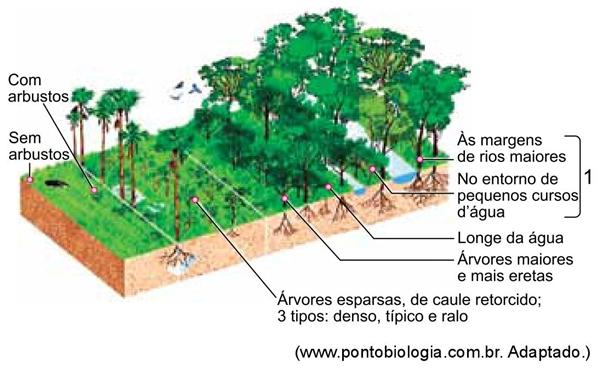 Bioma-vegetação
