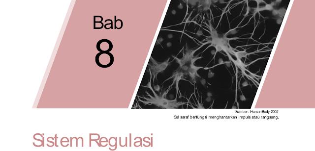 Bab 8 : Sistem Regulasi Dan Macam-Macam Sistem Regulasi Pada Manusia