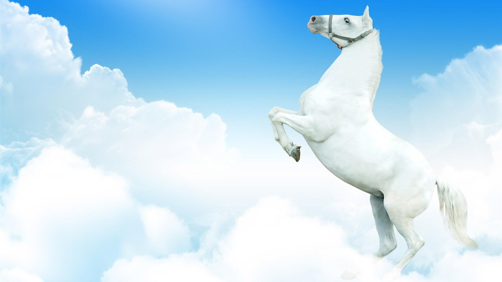 white horse wallpapers - gratis gambar background wallpaper