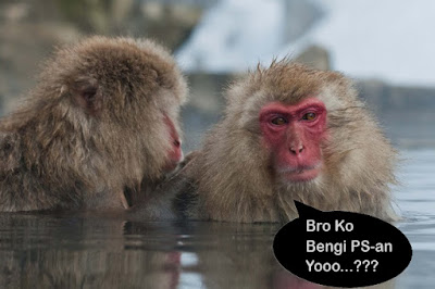 foto monyet muka merah lucu