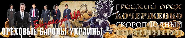 Купити саджанці горіха Іван Багряний, 0985674877, 0957351986, Walnuts Broker