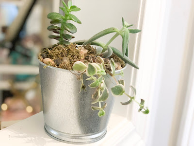 Succulents in your home