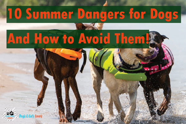 10 Summer Dangers for Dogs — And How to Avoid Them