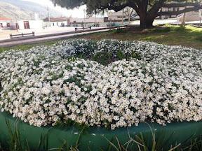 Adornan plaza Bolívar de Mucuchíes con siembra de plantas ornamentales