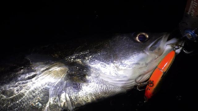 シーバス 湾奥大型河川 TACKLEHOUSE シンキングスライダー