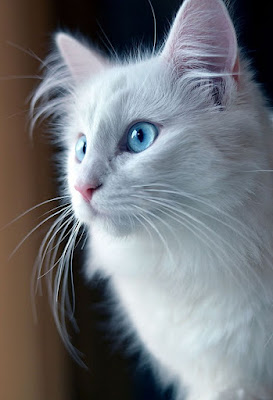 YOUR CAT'S PERSONALITY IS INFLUENCED BY YOURS, HOW
