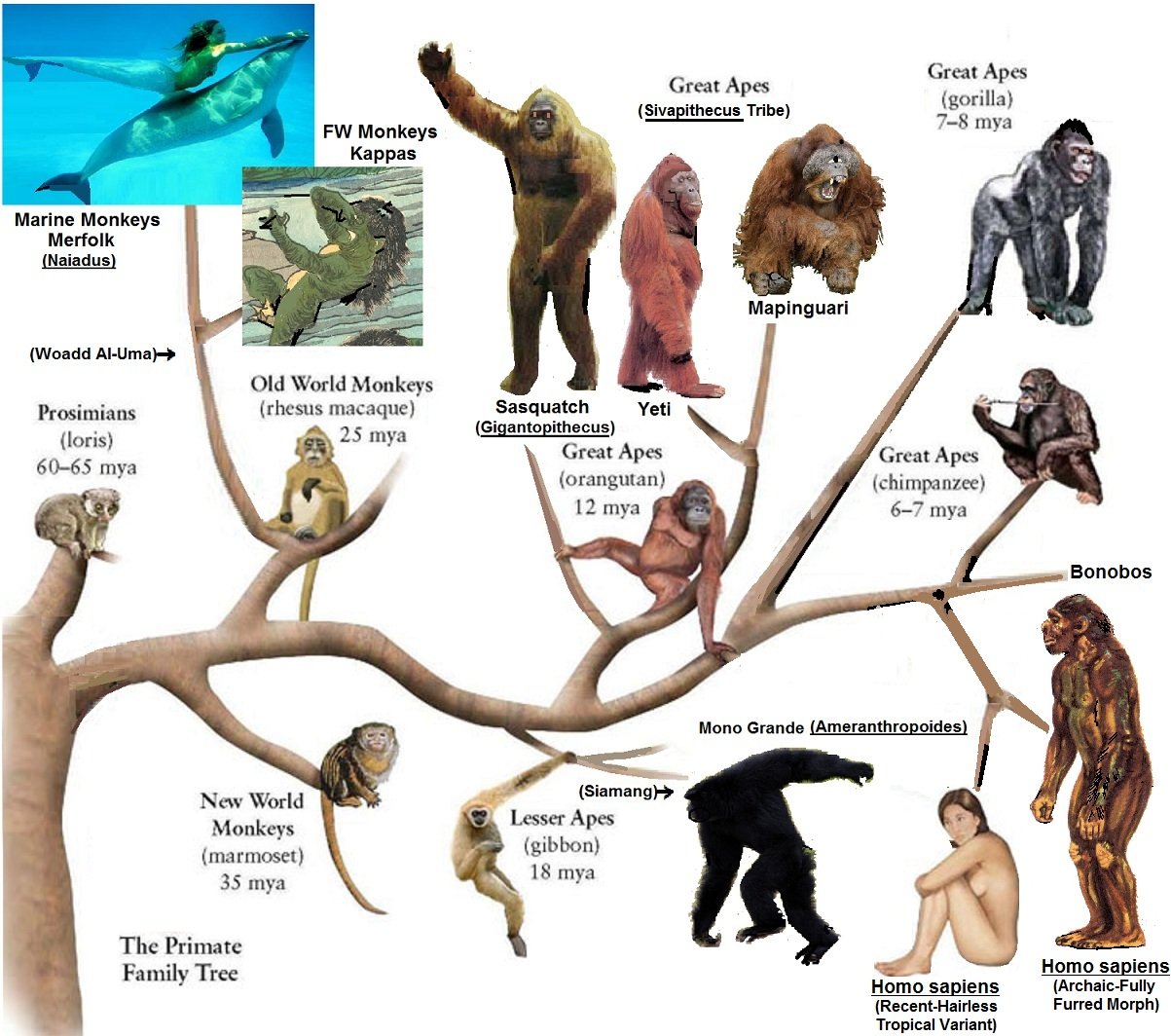 viri essay chimps and humans